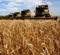 День работников сельского хозяйства и перерабатывающей промышленности